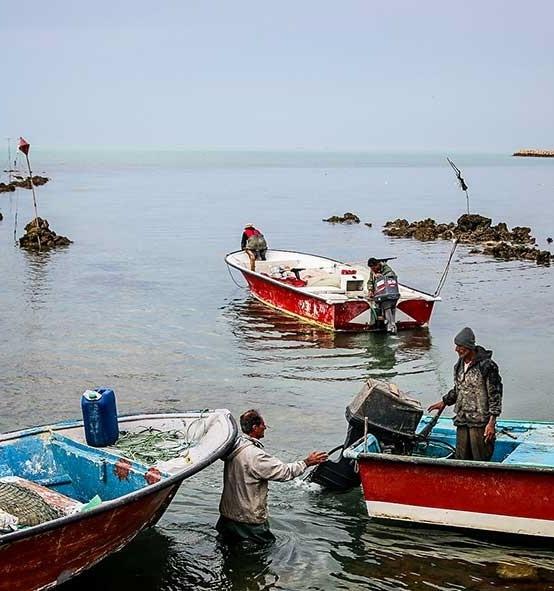 صید ماهی مرکب در آبهای بوشهر 78 درصد کاهش یافت
