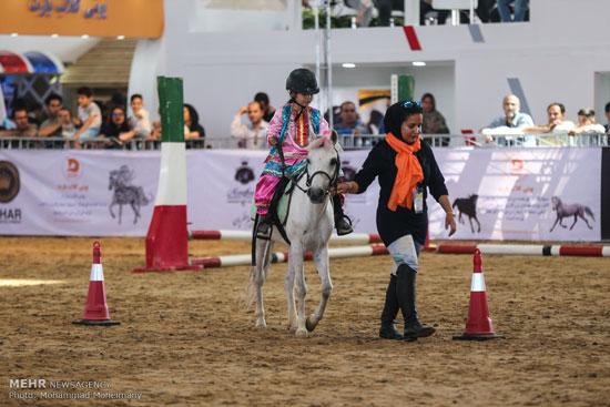 نمایشگاه بین المللی اسب و حیوانات همزیست