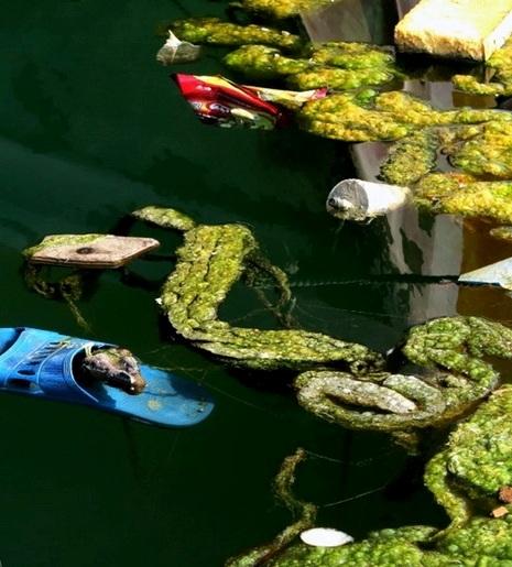 ورود فاضلاب های خانگی به دریا در بوشهر اسفناک است