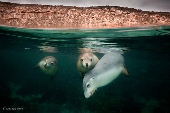 مسابقه عکاسی طبیعت و حیاتوحش استرالیا