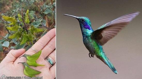گیاهی با شباهت عجیب به یک پرنده!