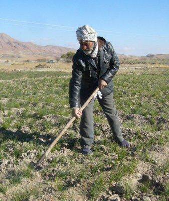 23 هزار خانوار روستایی بوشهر فاقد هر نوع بیمه
