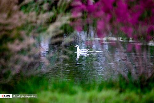تالاب صالحیه؛ استراحتگاه پرندگان مهاجر