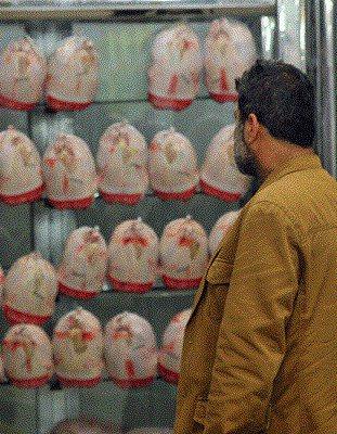 ممنوعیت خروج مرغ زنده از استان بوشهر/ وضعیت توزیع مناسب نیست
