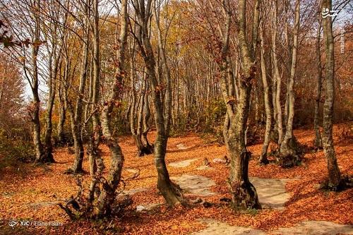 تصاویری زیبا از پاییز جنگل دیلمانِ گیلان